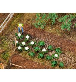 Kalafiory białe i zielone ca. 5mm,20sz - Faller 181257