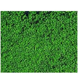 Heki 1602 - Heki Mikroflor ciemnozielony 28x14 cm