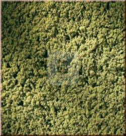 Auhagen 76667 - Mata gąbkowa, dzika zieleń