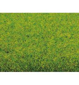 Noch 00260 - Mata trawiasta-wiosenna łąka
