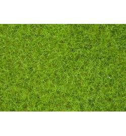 Noch 07092 - Wild Grass
