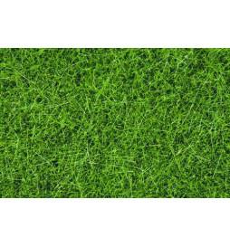 Noch 07094 - Wild Grass
