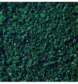 Noch 07146 - Listowie ciemna zieleń