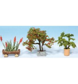 Noch 14020 -Rośliny ozdobne w donicach