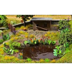 Noch 14052 -Rośliny do oczka wodnego