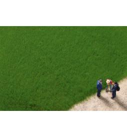 Auhagen 75615 - Trawa elektrostatyczna ciemna zieleń 4,5 mm