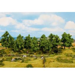 Noch 24603 - Drzewa liściaste 16 sztuk, 4 - 10 cm