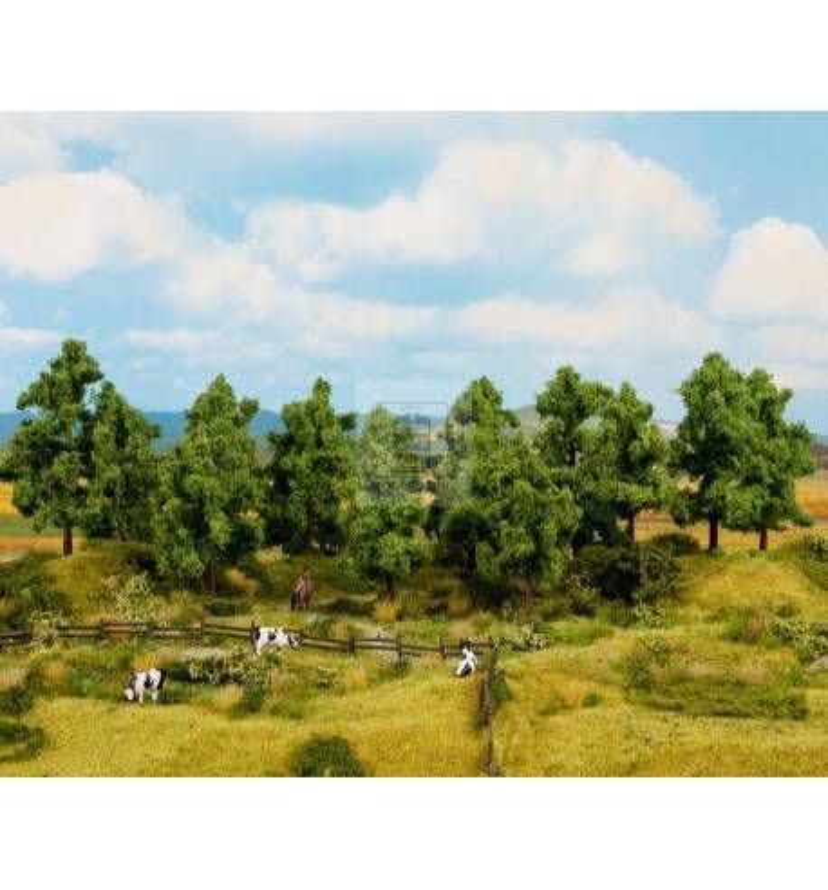 Noch 24600 - Drzewa liściaste 8 sztuk, 10 - 14 cm