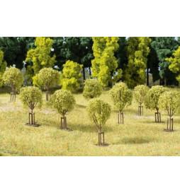 Auhagen 70950 - Młode drzewa