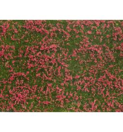 Noch 07257 - Siateczka łąka czerwona