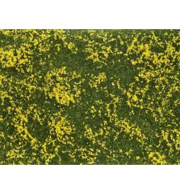Noch 07255 - Siateczka żółta łąka